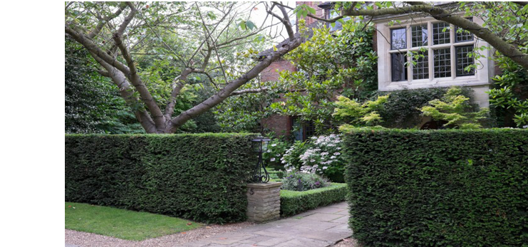New Hedges, decorative or screening, pruning or thinning, tree care an dplanting by qualified professionals at Elliott Landscapes in London